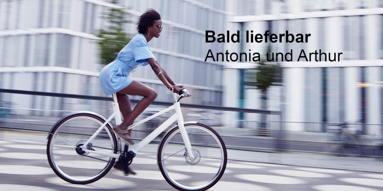 Header-Antonia